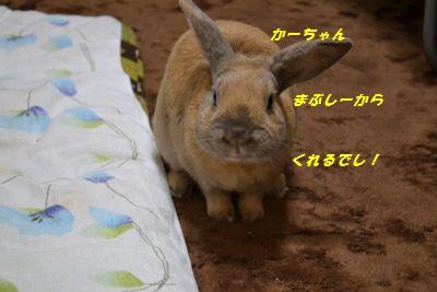 022_20130223112649.jpg
