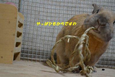 051_20130207132616.jpg