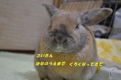 051_20130219150133.jpg