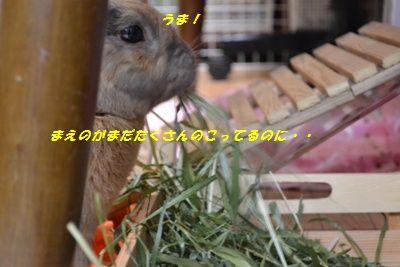052_20130215162657.jpg