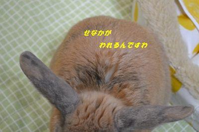053_20130219182552.jpg