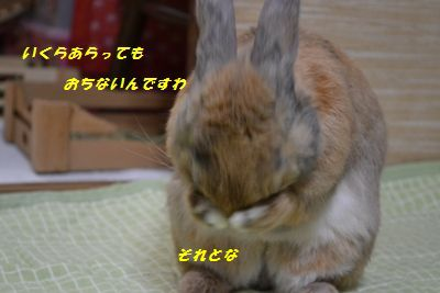 090_20130219150142.jpg