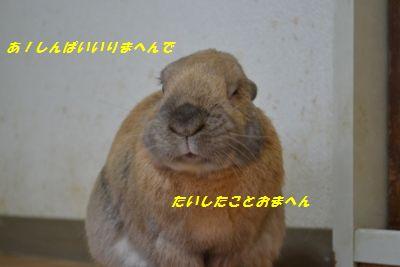 096_20130124162730.jpg