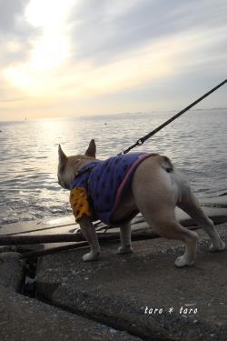初めての海散歩3