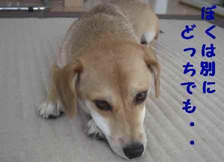 2010_0814_124044.jpg