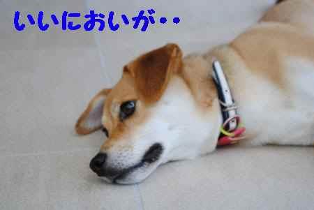 2010_0904_145726-DSC_0293_convert_20100904173637.jpg