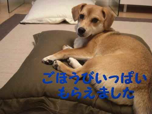 2010_1001_221007-CIMG3465_convert_20101001221857.jpg
