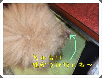DSCF9093-1.jpg
