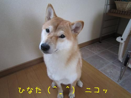 IMG_5139_convert_20111102220327.jpg