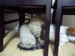 テーブルの下1