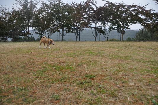 群馬県りんご狩り 272