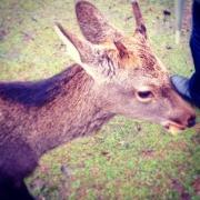 deer1102.jpg
