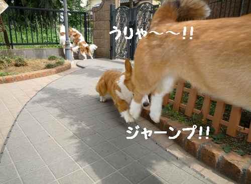 2011_0516_131338-P1090973.jpg
