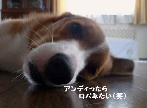 2011_0516_143321-P1100014.jpg