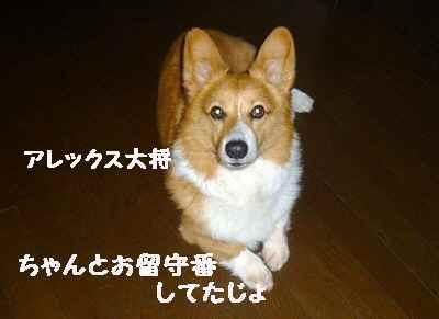 2011_0530_105949-P1100352.jpg