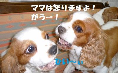 2011_0621_183927-P1100527.jpg
