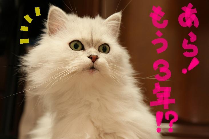 (2)_20111123003147.jpg