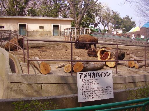 動物4-20