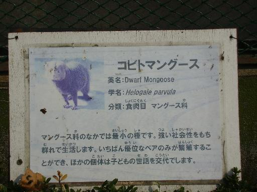 動物4-26