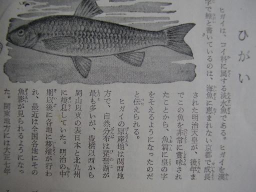 動物11-12