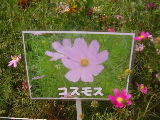 植物1-3