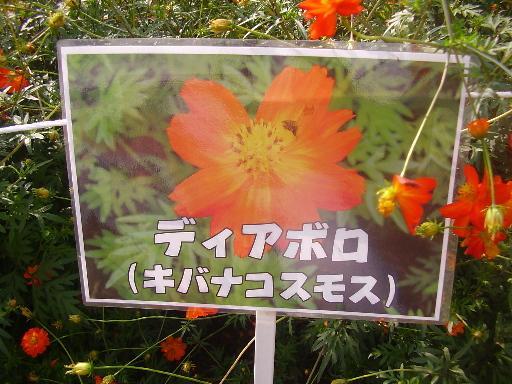 植物1-1