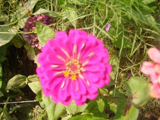 植物1-7