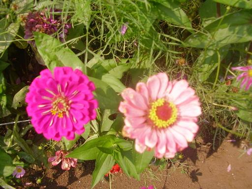 植物1-8