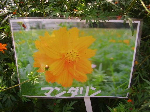 植物1-10