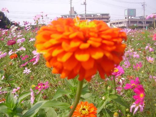 植物1-9