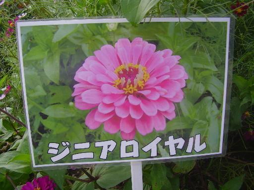 植物1-6