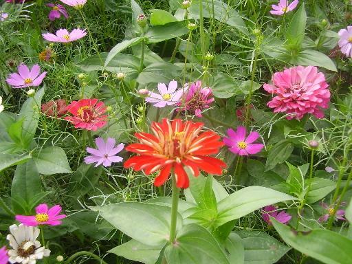 植物1-14