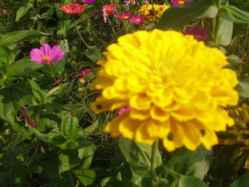 植物1-17