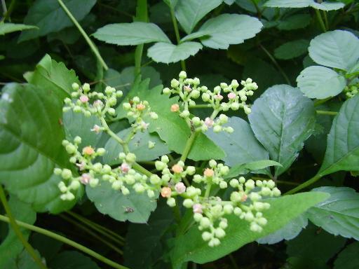 植物14-11