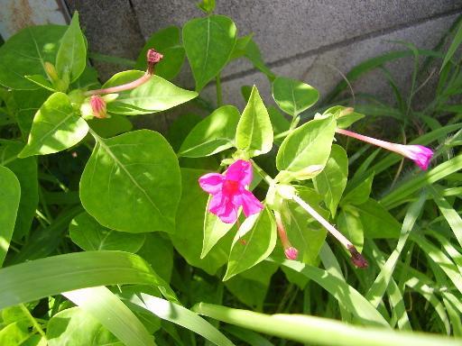 植物15-5
