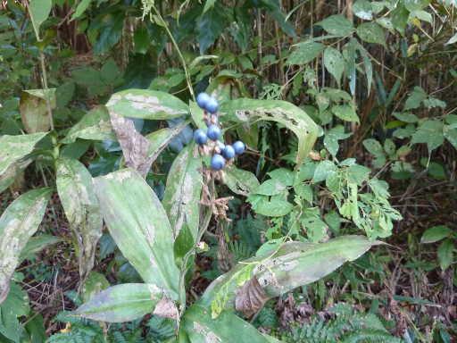 植物20-9