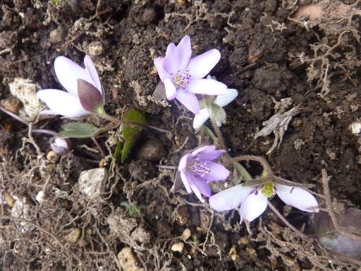 植物29-6