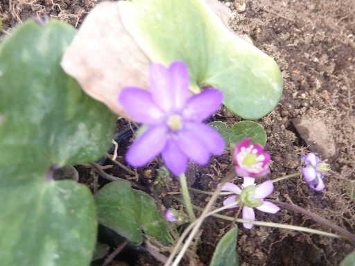 植物29-5