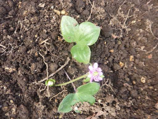 植物29-2