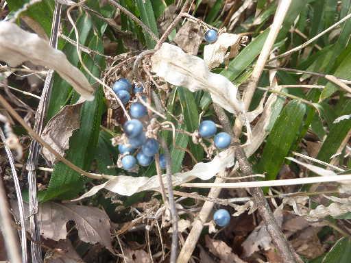 植物30-12