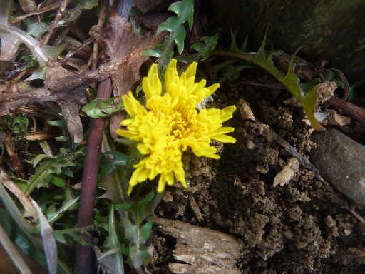 植物31-10