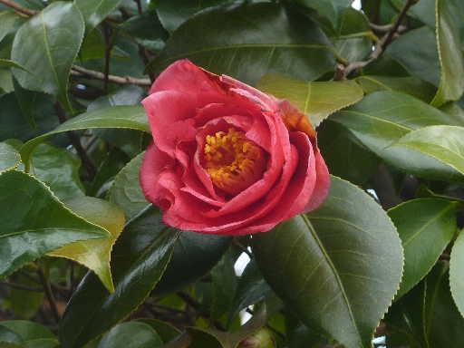 植物32-3