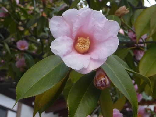 植物32-4