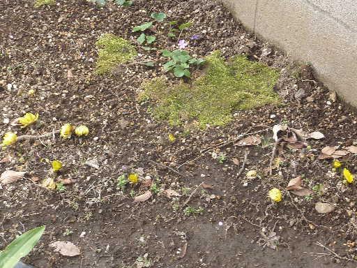 植物32-8