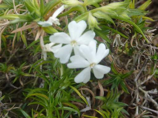 植物32-7