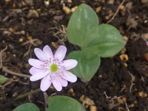 植物32-14