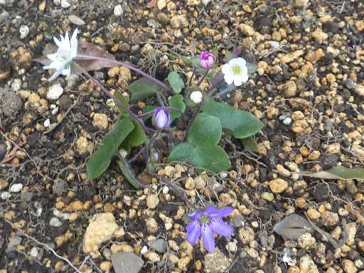 植物32-13