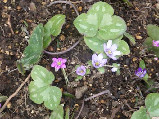 植物32-12