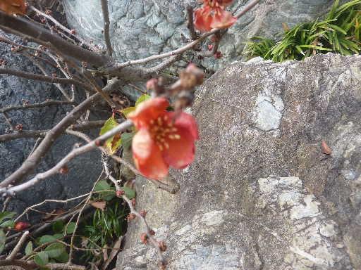 植物32-17