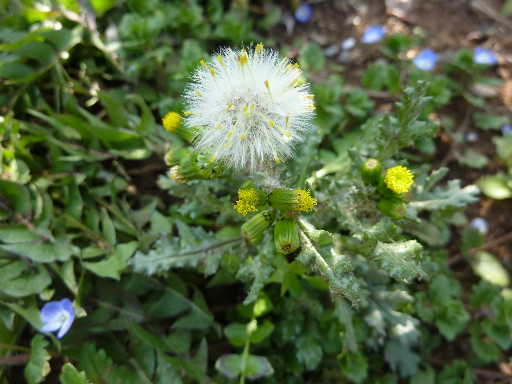 植物34-4